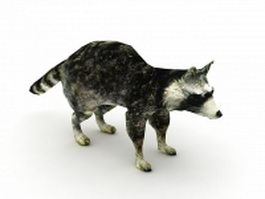 Raccoon dog 3d model