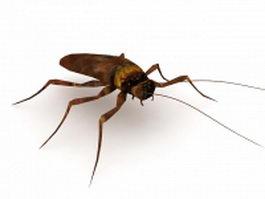 Household roach 3d model