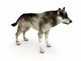 Western wolf 3d model