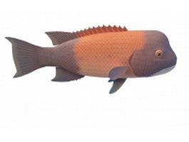 California Sheephead 3d model