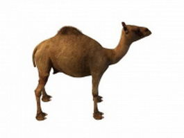 Egyptian camel 3d model