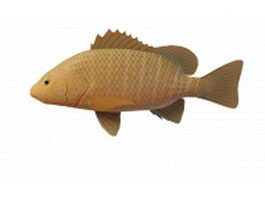 Mangrove snapper fish 3d model
