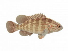Brown striped fish 3d model