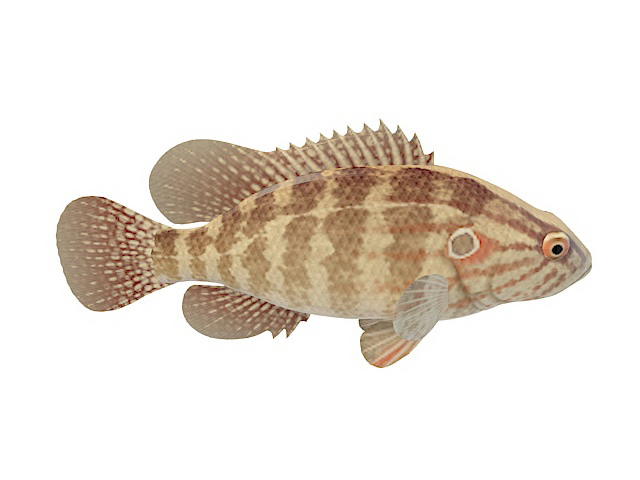 Brown Striped Fish 3d Model 3ds Max Files Free Download