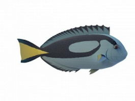 Powderblue surgeonfish 3d model