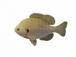 Freshwater panfish 3d model