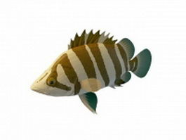Siamese tigerfish 3d model