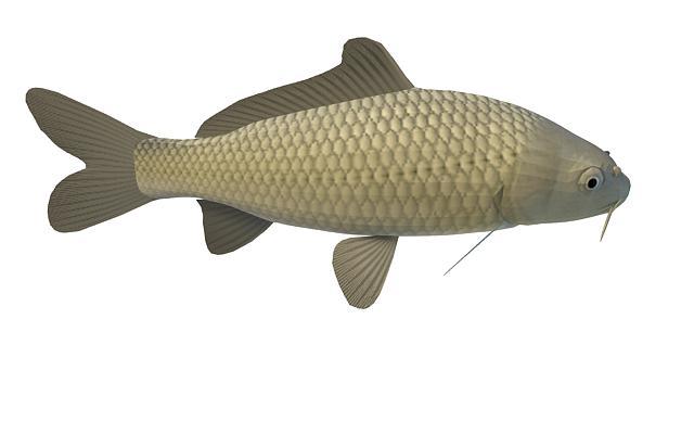 Freshwater Carp Fish 3d Model 3ds Max Files Free Download