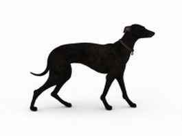 Black greyhound 3d model