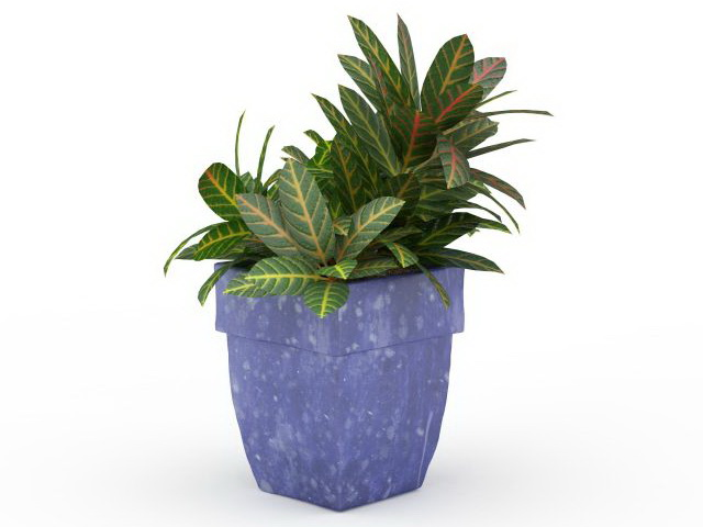 Large Leaf House Plant 3d Model 3ds Max Files Free