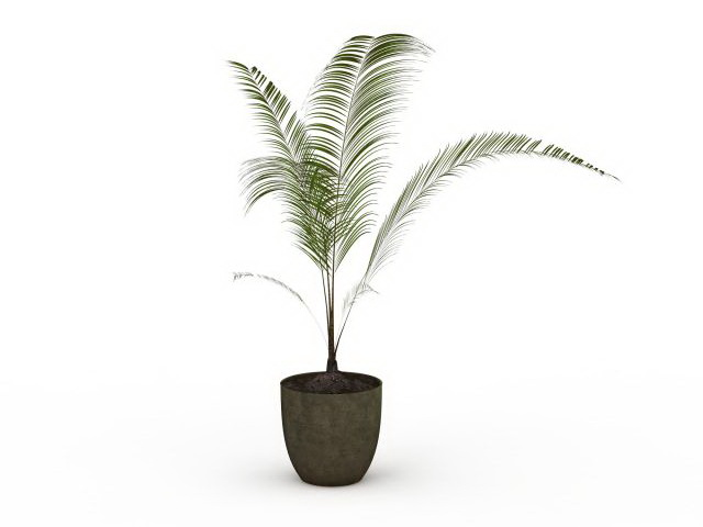 Potted palm plant 3d model 3ds max files free download - modeling