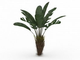 Elephant ear plant tree 3d model