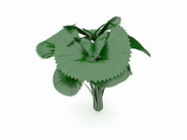Broad leaved plant 3d model