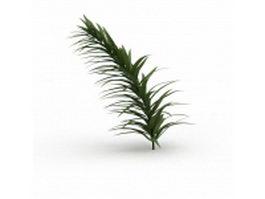 Narrow leaf plant 3d model