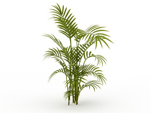 Bamboo palm plant 3d model 3ds max files free download - modeling