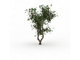Evergreen huckleberry bush 3d model