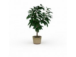 Gardenia potted plants 3d model