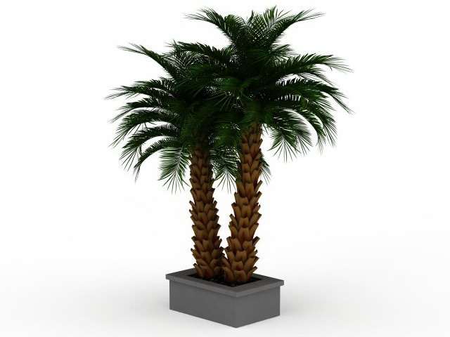 Outdoor potted palm plants 3d model 3ds max files free download