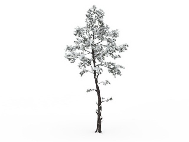 Snowy Tree 3d Model 3ds Max Files Free Download Modeling