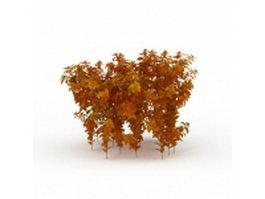 Dwarf fothergilla fall color 3d model