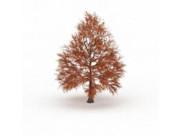 Metasequoia dawn redwood tree 3d model