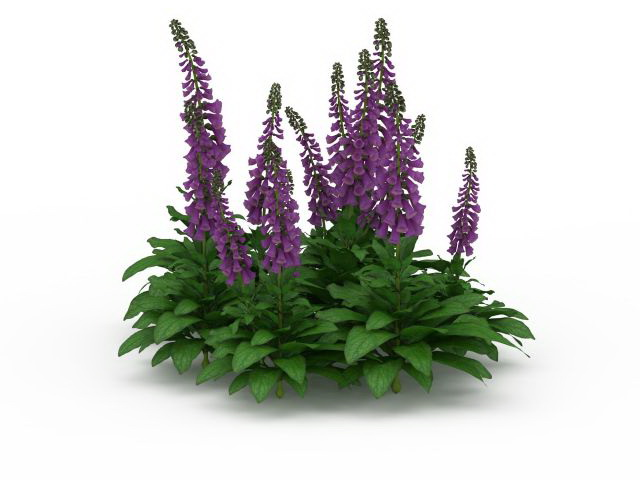 Salvia Divinorum Plants 3d Model 3ds Max Files Free