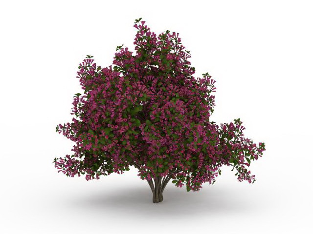 Flower Blooming Tree 3d Model 3ds Max Files Free Download