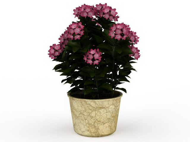 House Plants And Flowers 3d Model 3ds Max Files Free