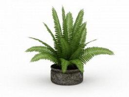 Fern plant pot 3d model