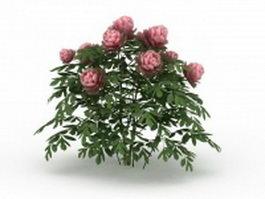 Pink peony plants 3d model