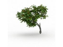 Persimmon tree 3d model