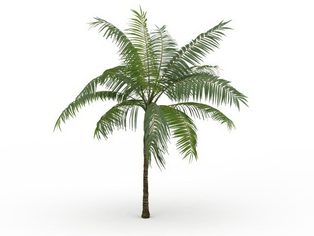 Royal Palm Tree 3d Model 3ds Max Files Free Download