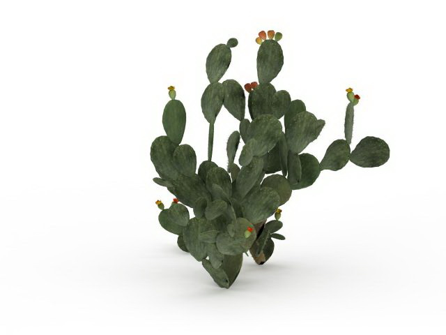 Cactus Fruit 3d Model 3ds Max Files Free Download