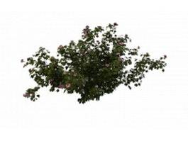 Hibiscus plant 3d model