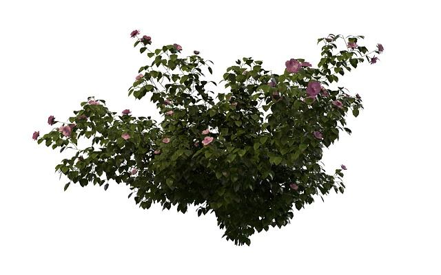 Pink Rose Bush 3d Model 3ds Max Files Free Download