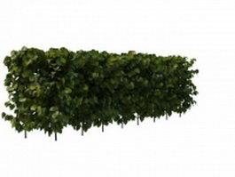 Evergreen privet hedge plant 3d model