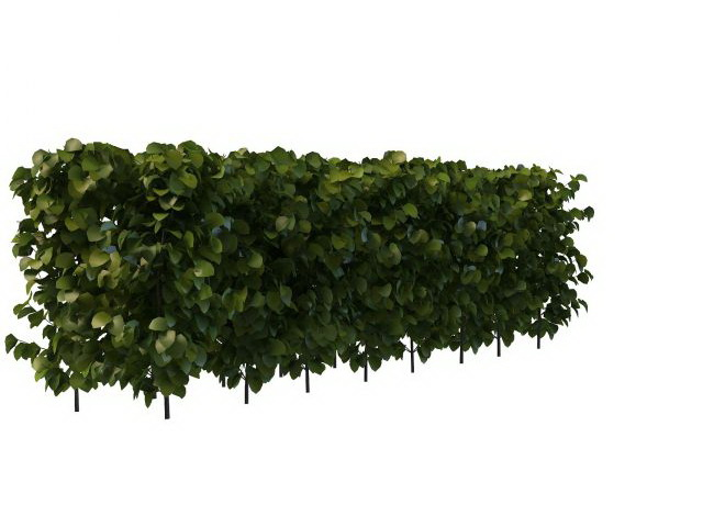 Evergreen Privet Hedge Plant 3d Model 3ds Max Files Free