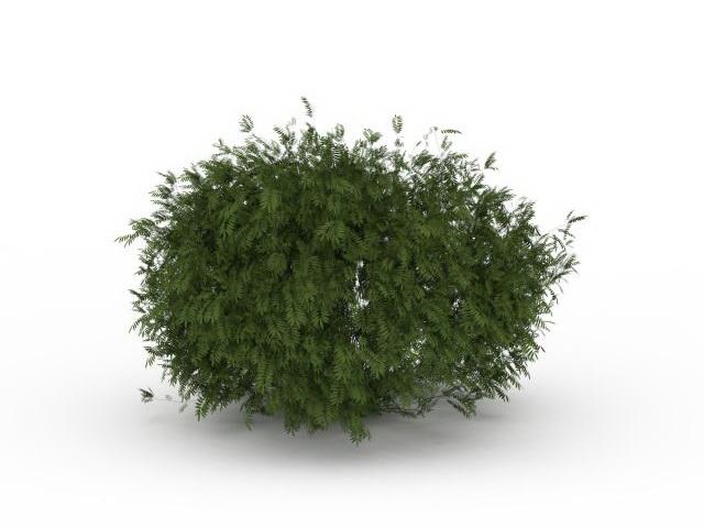 pine shrubs for landscaping 3d model