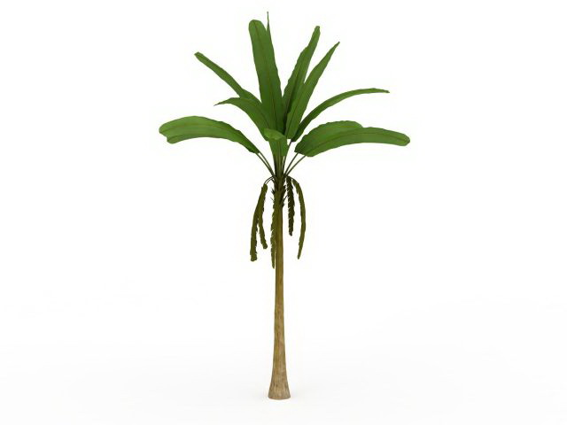 Tall Banana Tree 3d Model 3ds Max Files Free Download Modeling