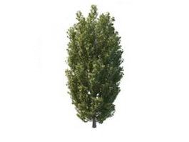 Mountain aspen trees 3d model