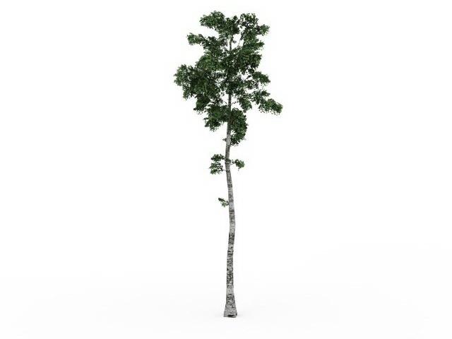 tall birch tree 3d model 3ds max files free download