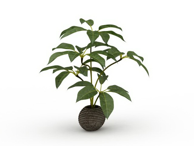 Broad Leaf Potted Plants 3d Model 3ds Max Files Free
