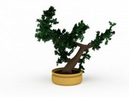 Japanese bonsai tree 3d model