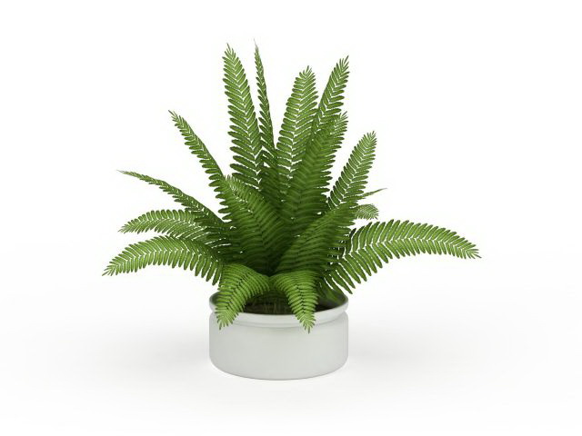 Boston Fern House Plant 3d Model 3ds Max Files Free