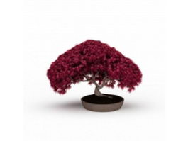 Bonsai red maple 3d model