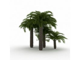 Mediterranean fan palm plants 3d model