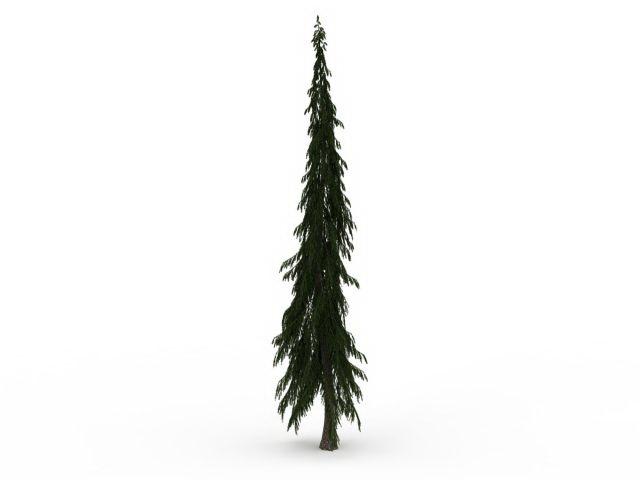 Tall Skinny Spruce Tree 3d Model 3ds Max Files Free