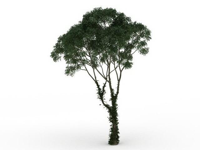 Juniper tree 3d rendering