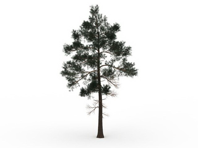 jack pine tree 3d model 3ds max files free download