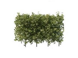 Hedges for landscaping 3d model
